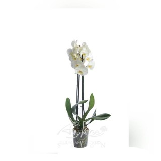 White orchid small